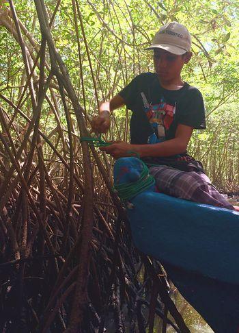 Feel The Journey Mangrove Forest Mangrove Mangrove Life El Salvador Culture Tourguide Tourism