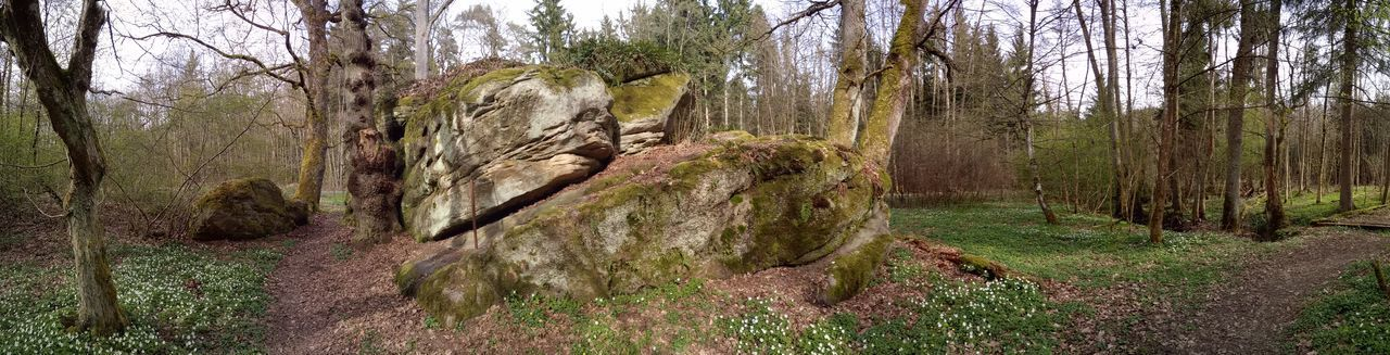 Rock - Object Tree Sky Grass Blooming Panoramic