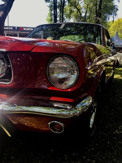 Ford Mustang Mustang GT Ford Car Mode Of Transportation Motor Vehicle Land Vehicle Transportation Headlight Day Red Tree Vintage Car No People Close-up