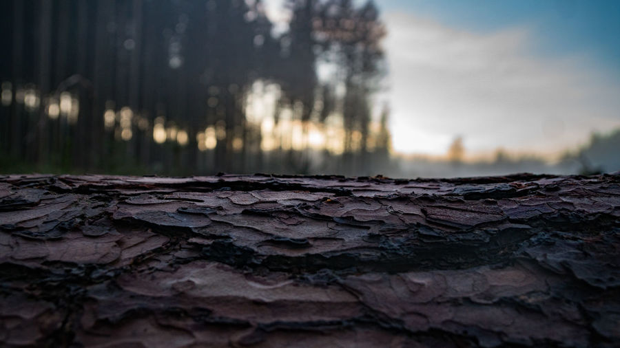 Tree tunk Tree Trunk Close-up Day Forest Photography Modygrams Moody Nature No People Outdoors Sky Sunset Textured  Tree Wallpaper