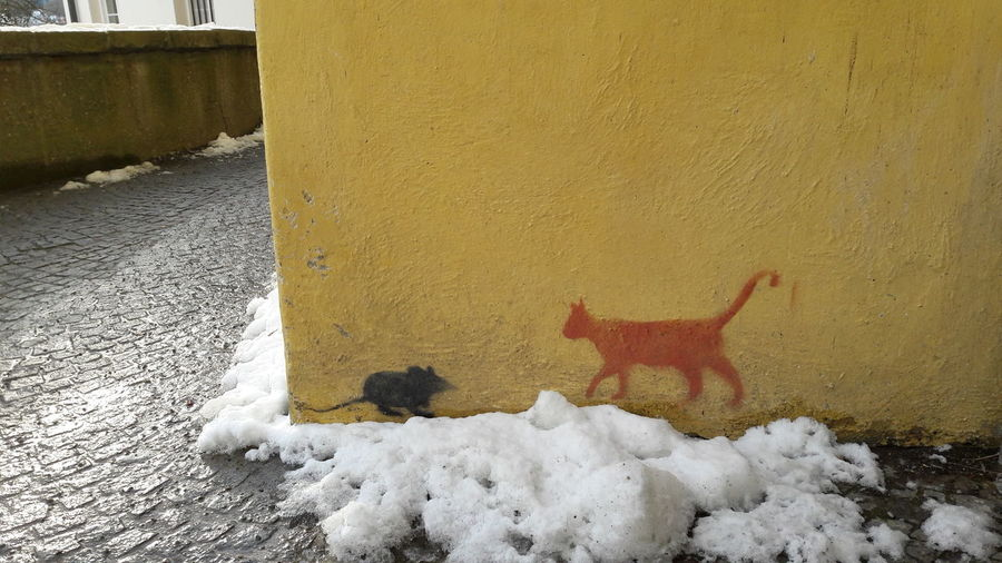 Streetart Deeper Meaning Hobbyphotography Street Streetart/graffiti Cat Mouse Art Unknown Artist Snow Winter Cold Temperature Yellow Wall Dangerous Building Urban Scene Passageway Archway Built Structure