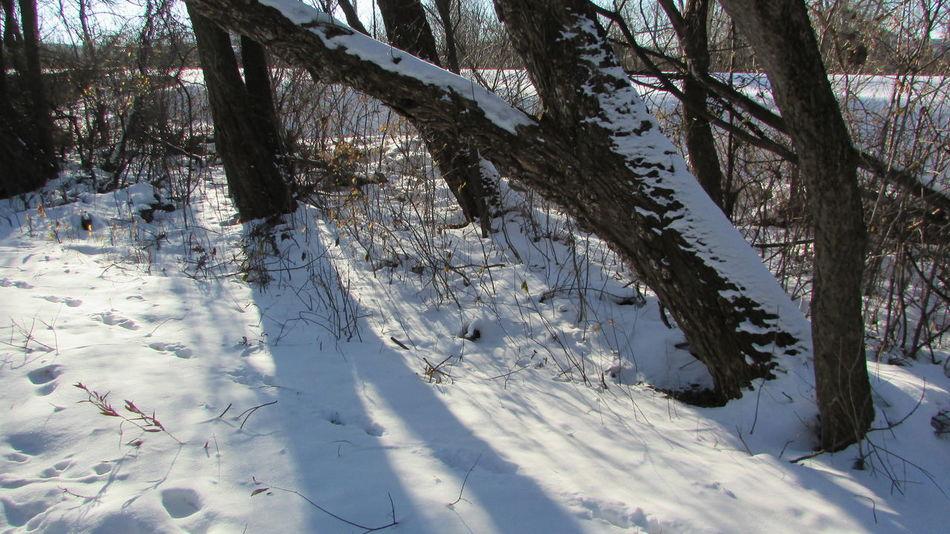 Walking Around Clam River Trail Winter Wonderland Snowy Tree Sunnyday☀️ Cool_capture_ Beautiful Day Cadillac Michigan
