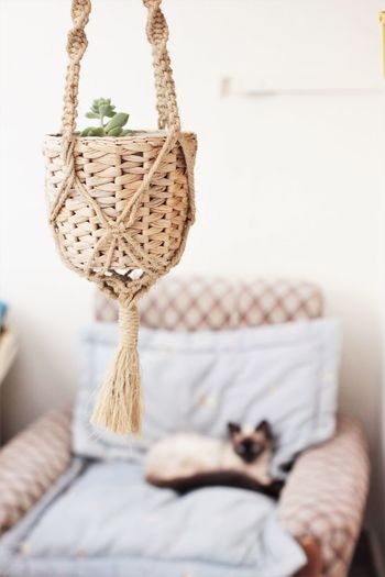 indoor balcony decor Basket Indoors  Furniture Container Focus On Foreground No People Home Interior Hanging Art And Craft Cat,  Plnats Decoration Hang Basket Balcony Indoor Balcony Relaxation White Color Domestic Room Sofa Selective Focus Day Pet Indoor Gardening Suculentas Y Cactus
