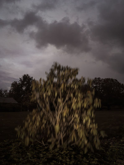 I am the tree IPhone SE Nklb Misterious Twillight Hour Plant No People Storm Cloud Overcast Ominous Power In Nature Darkness Motion Blur Effect Gardening Park Plant