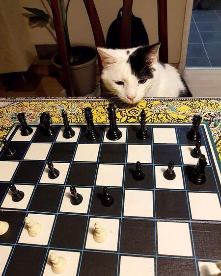 Cat relaxing on tiled floor