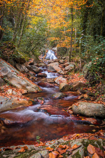 Stream flowing in forest during autumn