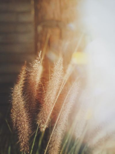touch of light VSCO IPhone Portraitmode Lensdistortions Focus Object