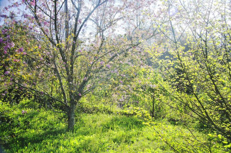 Dogwood Dogwood Tree Garden Nature Purple Flower Spring Springtime Springtime 2016 Springtime Blossoms Trees