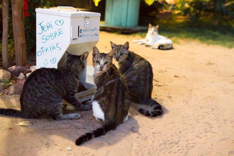 Straycats Stray Cat Feeding Cats Cat Gang Street Cats Cats Cats In The Dark Beachcats