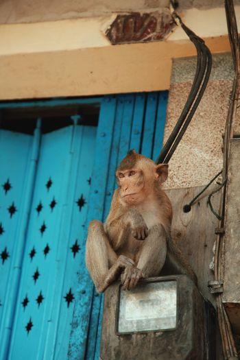 Monkey sitting on wood