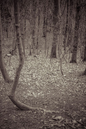 Beauty In Nature Bent Tree Black & White Black And White Branch Day Forest Growth Lots Of Leaves Monochrome Nature No People Outdoors Tranquility Tree Tree Trunk Trees WoodLand
