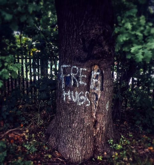 😳 No thanks...... Tree Tree Trunk Forest No People Outdoors Nature Eyemvision Scary Creepy EyeEm Best Shots Hugs The Week On EyeEm EyeEmNewHere NewEyeEmPhotographer EyeEm Gallery Photography EyeEmBestPics Horror No Thanks