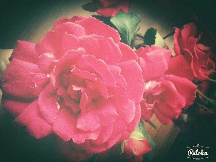 Цветы-делают жизнь лучше! ♥