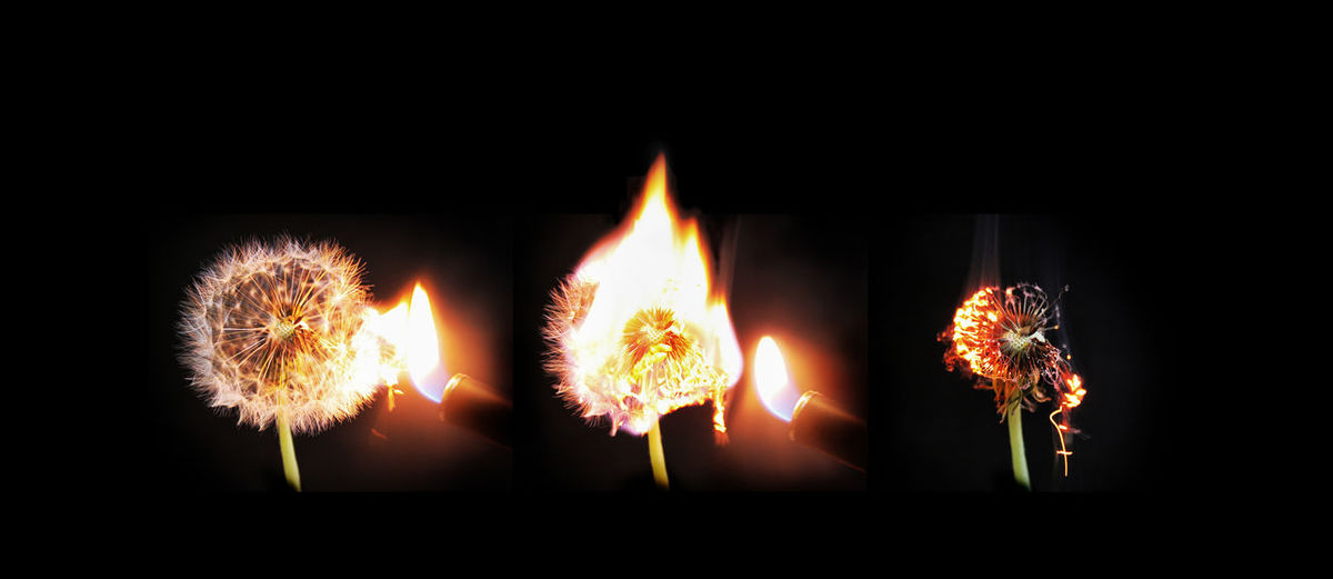 ArtWork Black Background Burning Crazy Dandelion Explosion Flowers Lions' Tooth Löwenzahn Maverick Nature One Moment Roll By Time Lapse Timelapse Art Is Everywhere Art Is Everywhere BYOPaper! Perspectives On Nature Visual Creativity