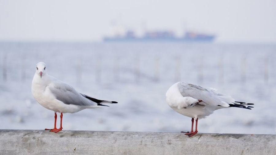 Seagulls perching on a beach