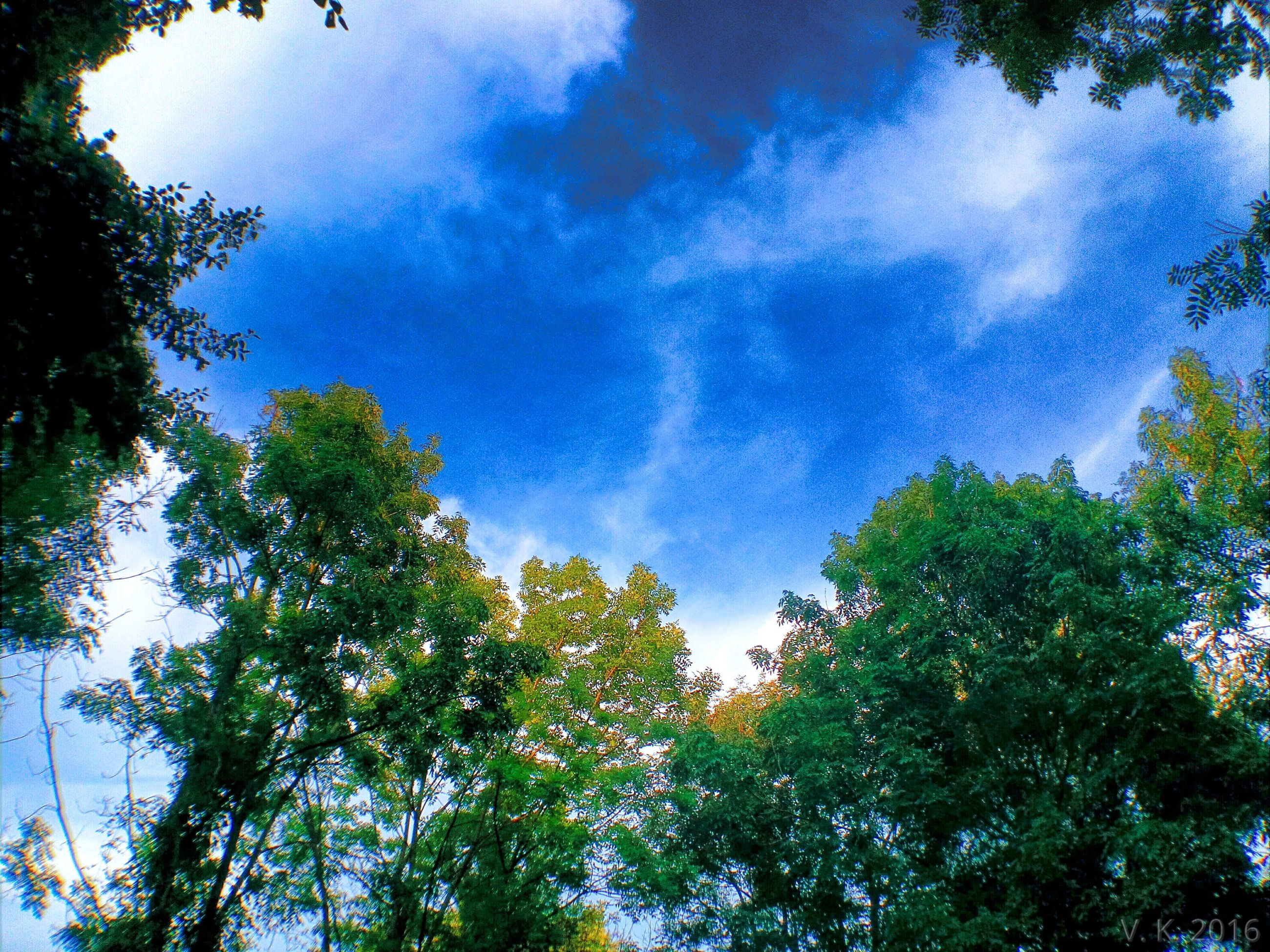 tree, low angle view, growth, blue, sky, branch, scenics, green color, tranquility, green, tranquil scene, beauty in nature, nature, treetop, day, cloud, high section, outdoors, tree top, woodland, non-urban scene, lush foliage, no people, tree canopy, cloud - sky, majestic