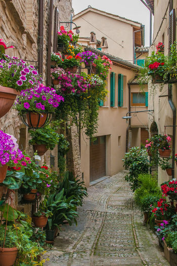 Romantic view of Spello medieval village with flowering balcony in Umbria Umbria Spello Flower Flower Head Flowering Plant Flowers Balcony Medieval Architecture Italy Europe Street Potted Plant Vase Of Flowers Blooming Bloom Romantic Charme Spring Travel Destinations Travel Tourism Card Geranium Surfinia Petunia Wallpaper Desktop Wanderlust EyeEm Best Shots Freshness Flower Pot Alley City Residential District No People House Nature Building Exterior Plant Built Structure Growth Building Day Outdoors Beauty In Nature Footpath