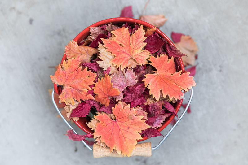 Directly above shot of red metal bucket filled with red vine leaves standing on concrete floor Cleaning Gardening Housework Autumn Beauty In Nature Bucket Change Close-up Concrete Day Directly Above Floor Fragility Gardening Equipment High Angle View Leaf Leaf Vein Metal Nature No People Outdoors Pink Color Red Vibrant Color Vine - Plant