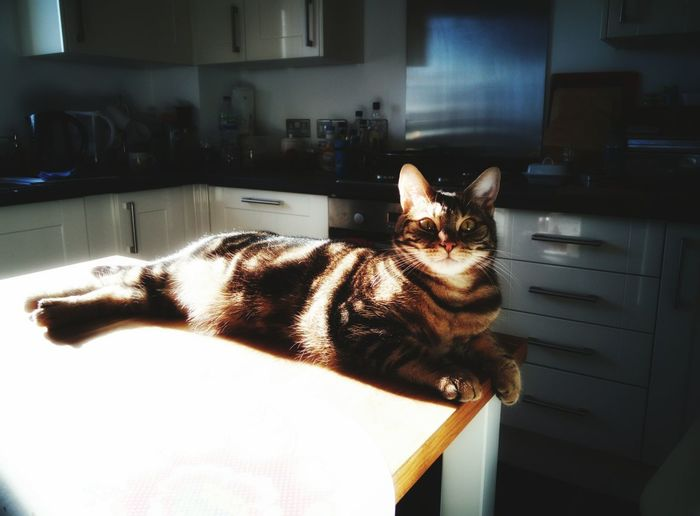 King of Island Kitchen Island Kitchen Life Kitchen Story Cat In My Home ❤ Cat At Home Cat♡ Cats Of EyeEm Cats 🐱
