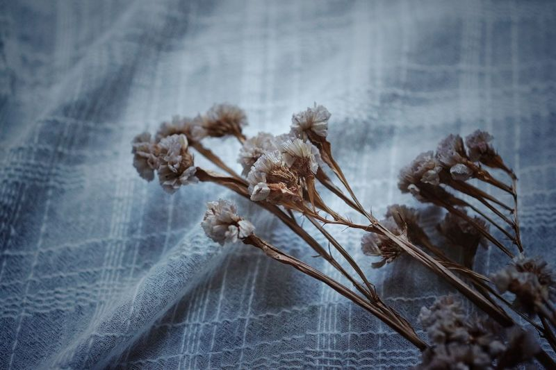 Close-up of dried flowers on white fabric