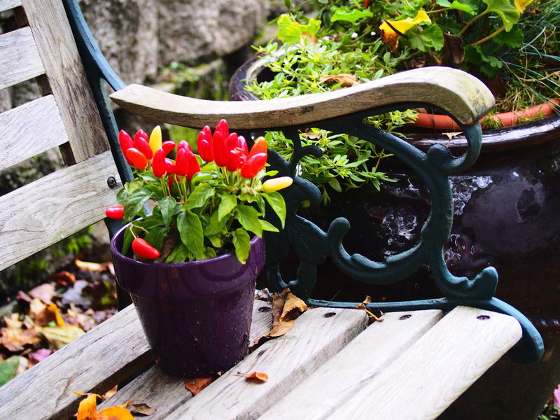 Beauty In Nature Close-up Day Flower Flower Pot Fragility Freshness Gardening Greenhouse Growth Nature No People Outdoors Plant Pliers Potted Plant Watering Can Work Tool