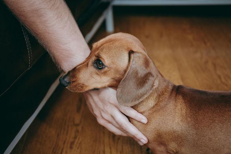 Cropped Hand Of Man Petting Dog Standing On Hardwood Floor