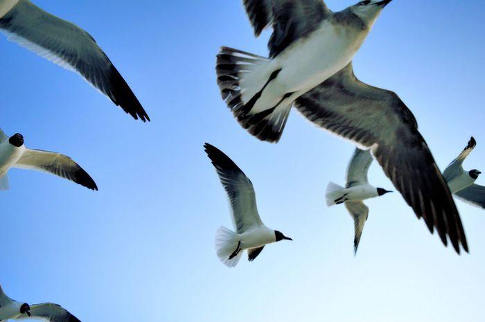 Seagull invasion... Seagull Birds Beach Nature Florida Seagulls In Flight Seagulls Flying Over Me