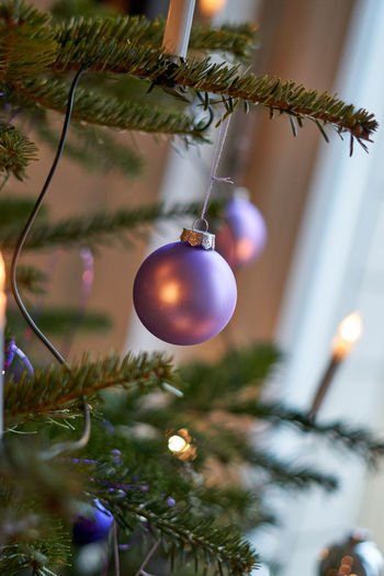 Celebration Christmas Christmas Decoration Christmas Ornament Christmas Tree Close-up Day Focus On Foreground Hanging Holiday - Event Indoors  No People Plant Tradition Tree