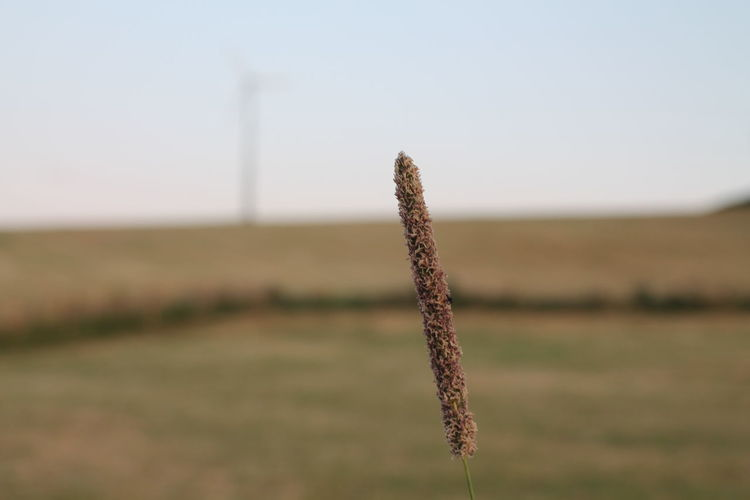 Close-up of plant on land against sky