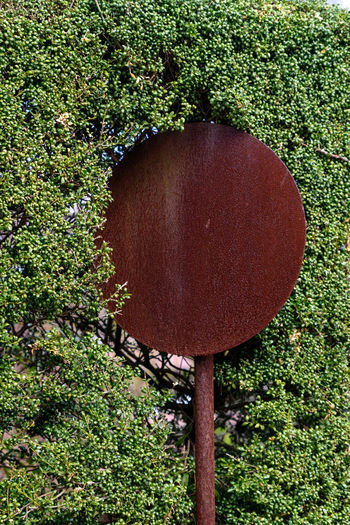 Plant Tree No People Green Color Nature Day Growth Wood - Material Directly Above Circle Food Geometric Shape Shape Food And Drink High Angle View Close-up Outdoors Brown Land Forest Decayed Sign