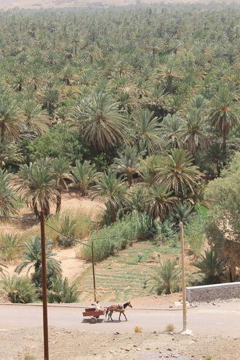 Connected By Travel Lost In The Landscape Trip North Africa Africa Travel Palm Tree Amazigh ♥♥Palm Trees Amazigh Berbere Bereber Berber  Merzouga Berber  Berbervillage Palm Tree Morocco 🇲🇦 Streetphotography Morocco Travel MoroccoTrip Landscape_Collection Moroccan Morocco Errachidia Berber
