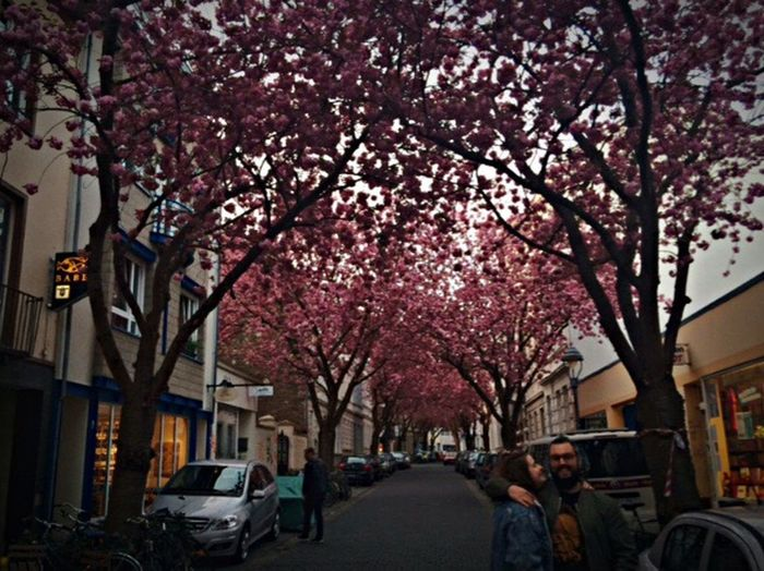Beautiful Bonn, Germany Tree Land Vehicle Transportation Car Mode Of Transport Architecture Built Structure Building Exterior Parking Street City Street Light Branch Growth Road Stationary Flower The Way Forward Day City Life Bonn Germany
