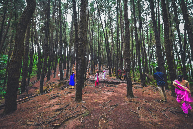 People by trees in forest