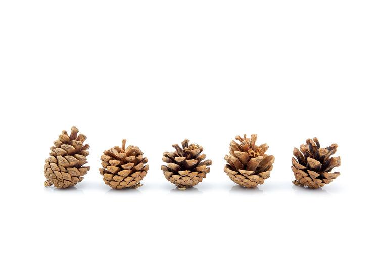 Pinecone Pine