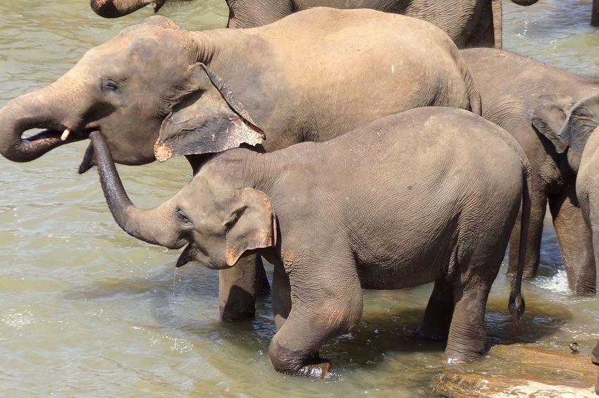 Elephant Animal Wildlife Animal