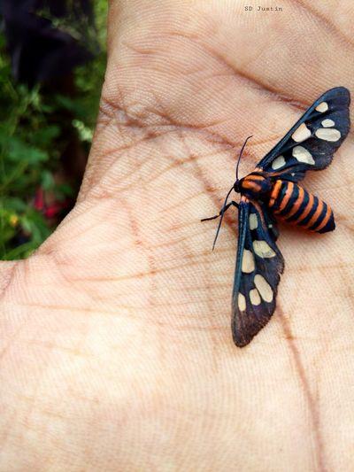 Moth My Hands