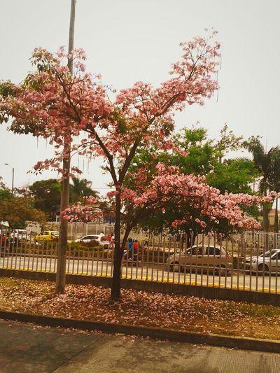 Apreciando lo maravillosa que es la naturaleza... First Eyeem Photo