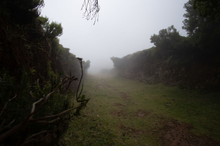 Fog Plant Tree Tranquility Tranquil Scene Nature Beauty In Nature Land Environment Day Landscape No People Sky Scenics - Nature Direction Grass Non-urban Scene Outdoors Footpath Trail