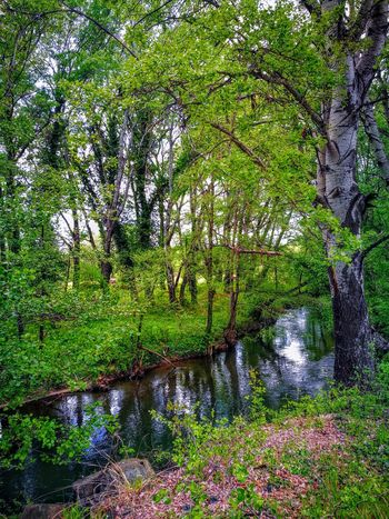 EyeEmNewHere Outdoors Blue River Wellness Biking And Photography Beauty In Nature Green Color Growth Freshness For EyeEm , HUAWEI P 9
