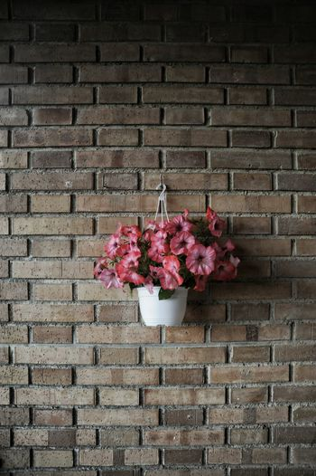 Pink flowers blooming on brick wall