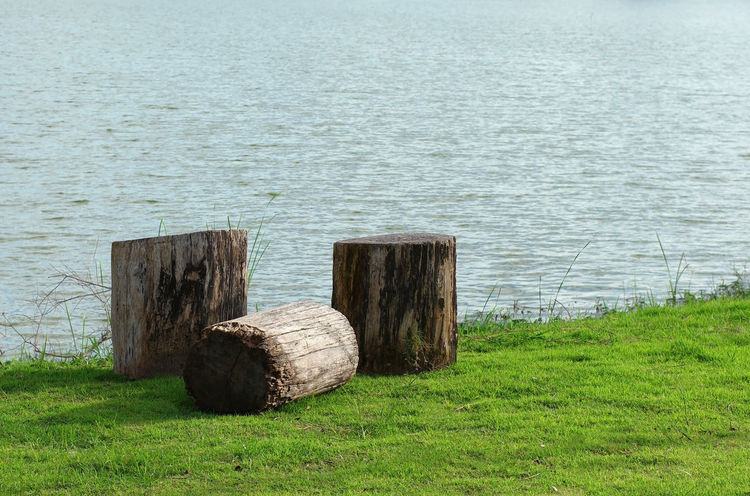 Day Deforestation Environmental Issues Grass Grass Greenery Nature No People Outdoors Sea Stump Timber Water Wood - Material Wooden Post Wooden Posts