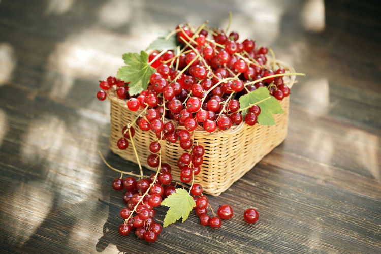 Harvested red currant berries in a small basket