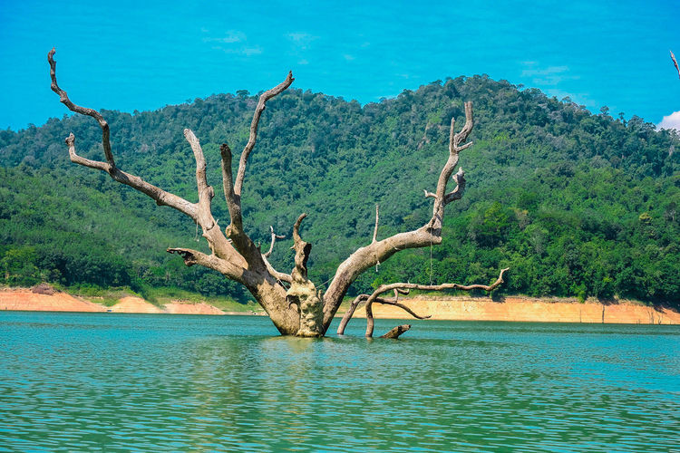 Dead tree by lake against sky