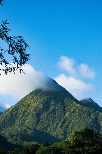 Piton Photography Landscape Travel Traveling Nature Landscape_photography Nature Photography Vegetation Landscapelovers Landscapephotography Naturephotography Montagne Martinique Tree Mountain Blue Sky
