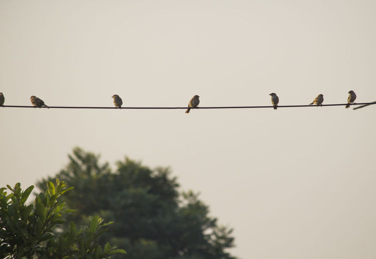 Birds In A Line Birds In A Row Nature Nature Photography 👣 Rainy Days☔ Rainy Season Sparrow Bird Sparrow Familt Sparrows Sparrows In A Sparrows In A L Wildlife & Nature Wildlife And Nature Wildlife Photography Wildlifephotography