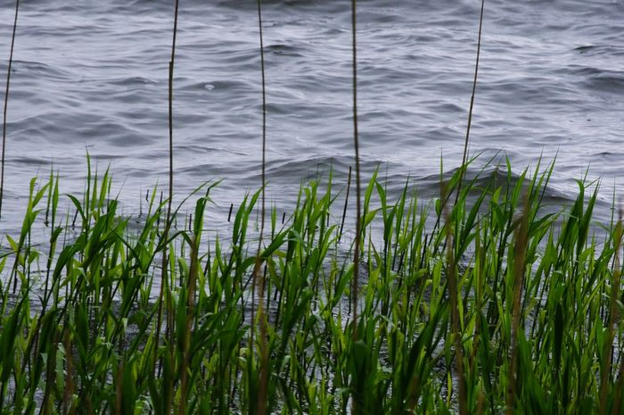 Nature On Your Doorstep Relaxing Taking Photos Walking Around The Lakes Nature Chewvalleylake New Reeds Yeah Springtime! Nature Beauty Choppy Waters