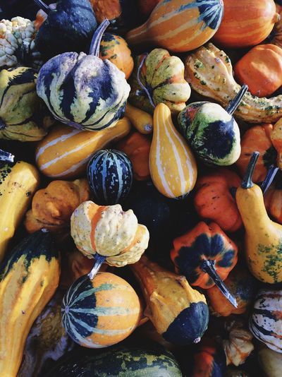 gourds for