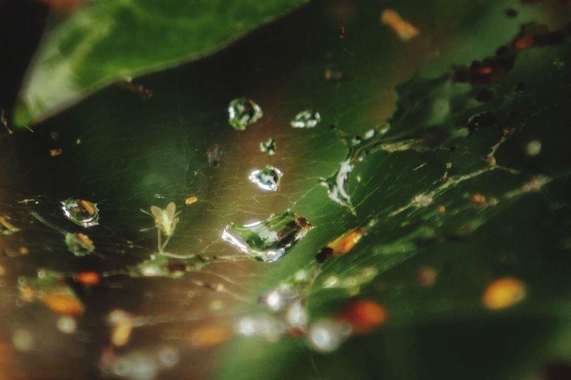 Water drups Water Drups Leaves moist
