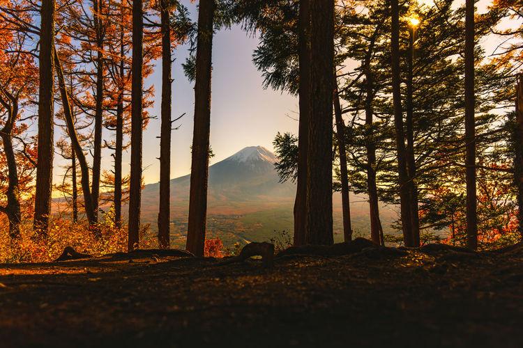 Mt Fuji Mount