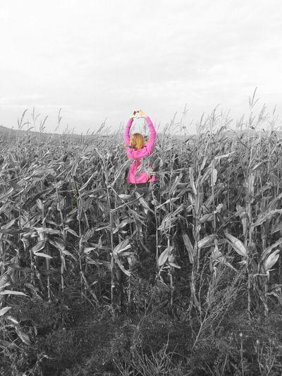Feldeer ♥ Mais Felder Maisfeld Ich